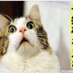予知夢・ウチの猫が、将来事故に遭う不思議な予知夢を見てしまったお話・招き猫ちゃんねる
