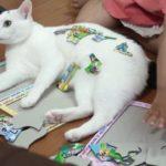 パズルを邪魔しに来たらパズルにされてしまう猫
