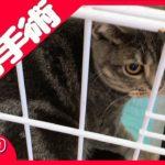 猫の去勢手術ドキュメンタリー【決断の時】雄猫と暮らす最初の試練