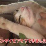野良猫がバンザイで寝ていたのでお腹をモフモフしてみた。