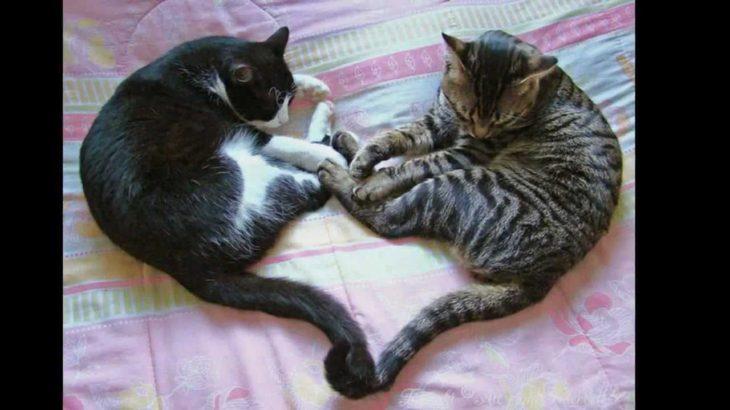 Funny cat pictures 笑える猫のおもしろ画像集