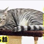 優しい爺猫・守護猫の話、私の体を心配して夢に出てきてくれた10年前他界した猫爺・招き猫ちゃんねる