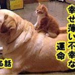 感動 泣ける話猫・ペットの姓名判断占いで『幸薄い』と言われたが最期はあいつらしい幸せな最後でした…(-_-)・招き猫ちゃんねる