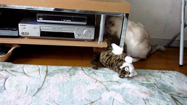 くすぐられて笑い転げる猫