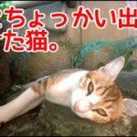 虫にちょっかい出して負ける猫。ハプニング発生!