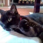 19年の思い出。猫とのお別れ ありがとう、せな