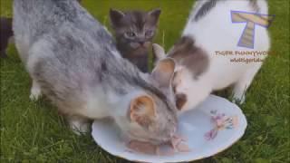 【猫 ねこ ネコ】見てるだけで癒されるカワイイ猫ちゃんたち!