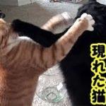 猫不思議・死んだ黒猫が俺を心配して霊となって出てきてくれたお話・招き猫ちゃんねる