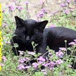 感動 不思議な話・生きてる時も死んでからもずっと守ってくれる猫・招き猫ちゃんねる