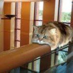 毎回驚くwびっくりするような場所にいる猫ちゃんたちw~Cat you are in a place like surprised.