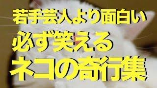 おもしろ動画 必ず笑えるネコの奇行集〜若手芸人より面白い!