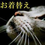 【感動実話 猫】泣ける「猫のお着替え」きっと愛猫はあなたの元へ帰ってきます chinta ch