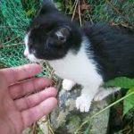 ビックリ、裏山から野良の子猫ちゃんがやって来た~(1) A stray kitten came from the mountain(1)【いなか猫1769】japanese funny cat