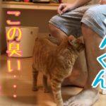 【猫 鳴き声】飼い主の浮気で嫉妬に狂うかわいい猫!浮気チェックがすごい!
