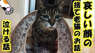 保護ネコ 泣ける話・自販機の陰に住みついた哀しい顔の捨てられた老猫、放っておけず家に迎え入れた・招き猫ちゃんねる