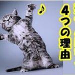 猫の習性・猫が飼い主を通せんぼする4つの気持ち・招き猫ちゃんねる