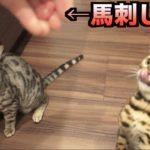 猫たちに馬刺しをあげたら大変なことに。。。