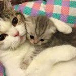 「猫かわいい」 すごくかわいい子猫 – 最も面白い猫の映画 #223