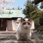 猫だらけの神社、やたらと喋ってくる白猫に出会う