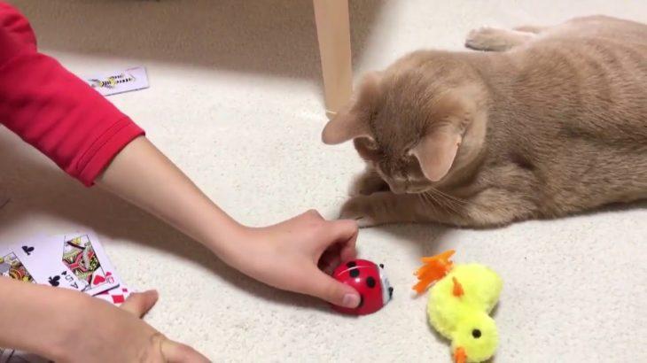フッと我に返る瞬間がかわいい猫