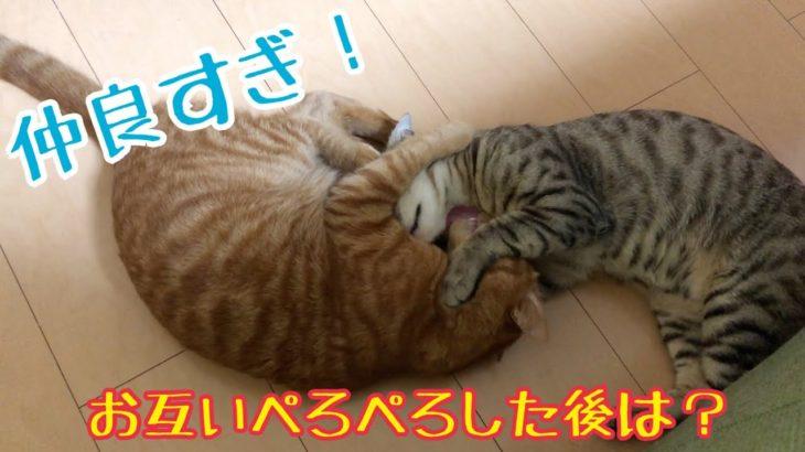 共同生活6日目!先住猫と野良保護猫は仲良くなりすぎました!