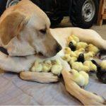 「絶対笑う」最高におもしろ犬,猫,動物のハプニング, 失敗画像集 #101