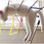 自由気まま!昼寝するねこ。猫の性格?どこでも寝れるネコたち。イヌ派のあなたも1度は見てね。