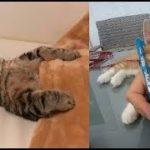 猫ちゃんの芸術的な可愛い寝方&寝姿にほっこりと癒される♡~It is healed by the cat's artistic cute sleeping and sleeping.