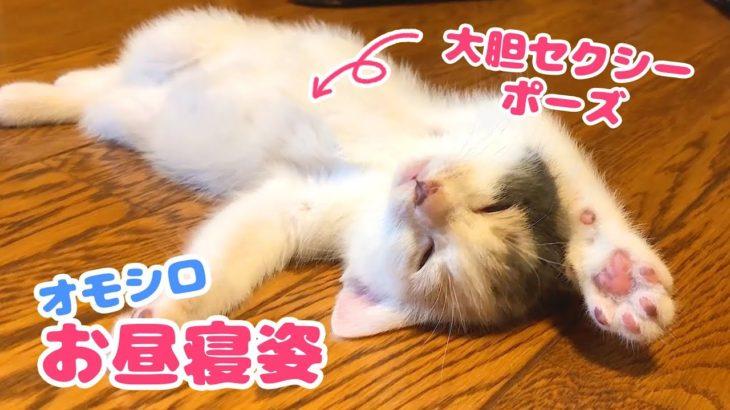 子猫のぽてと面白いお昼寝姿