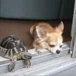 「絶対笑う」最高におもしろ犬,猫,動物のハプニング, 失敗画像集 #100