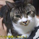 【神回】突然の猫の声にびっくり!おめめが真ん丸になる猫☆リキちゃんパパの元へダッシュで避難!【リキちゃんねる 猫動画】Cat video キジトラ猫との暮らし
