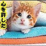 猫の気持ち・猫が心を許した人にだけする5つの仕草・招き猫ちゃんねる
