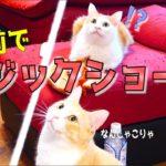 猫たちの目の前でマジックを披露してみたらwww