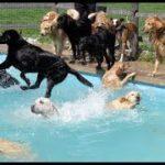 「絶対笑う」最高におもしろ犬,猫,動物のハプニング, 失敗画像集 #17✌