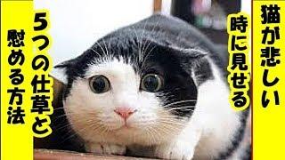 猫の気持ち・猫が悲しい時にする5つの仕草と慰める方法・招き猫ちゃんねる