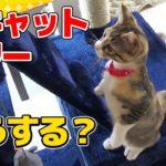 【猫】キャットタワーを設置したらビビリな子猫の反応は?:27日目【Kitten】