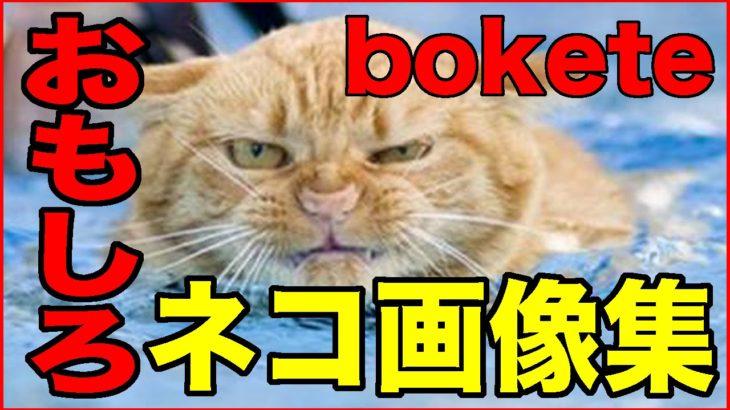 【おもしろ動物】ねこ・ネコ・猫編【爆笑画像集1】
