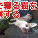 庭で寝る猫を定点観測してみた。