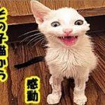 事故 障害感動・事故で片耳がちぎれた猫を保護、その子猫に無条件の愛と忍耐を教えられた・招き猫ちゃんねる