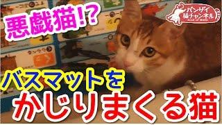 【猫かわいい】バスマットをかじる猫。噛み噛みが止まりません。