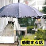 保護猫 里親・虐められ続けた弱い猫だけど誰よりも優しい猫のお話・招き猫ちゃんねる