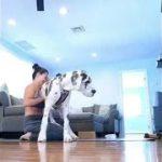 「絶対笑う」最高におもしろ犬,猫,動物のハプニング, 失敗画像集 #18✌