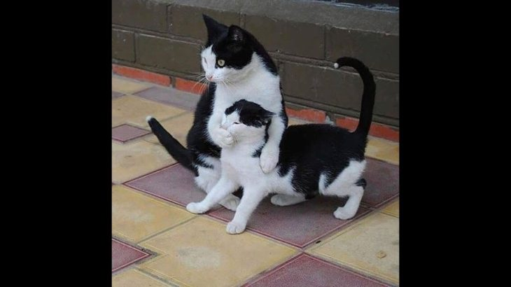 「絶対笑う」最高におもしろ犬,猫,動物のハプニング, 失敗画像集# 13