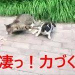 【笑える!】おバカだけど超カワイイねこちゃん【ネコ好き必見!】