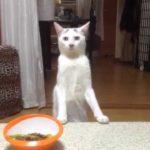 立ってバックする猫