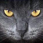 あの世 臨終・昔亡くなった猫の霊が老衰の猫をお迎えにくる話・招き猫ちゃんねる