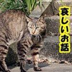 ペットロス哀しい話・悔やんでも悔みきれない、今日飼い猫が亡くなりました、立ち直れそうにありません・招き猫ちゃんねる
