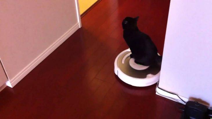 ルンバを乗りこなす猫 Cat manages a Roomba