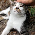 【田代島】山道で通る人皆に挨拶をするカワイイ猫に出会った