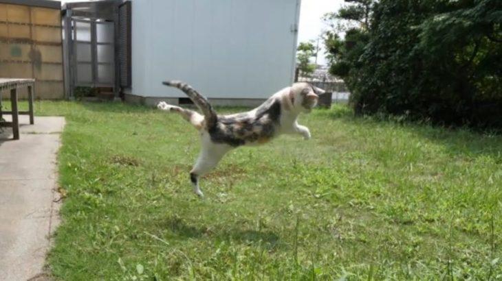 駿足カマキリに反撃されてびっくり仰天した三毛猫姉さん